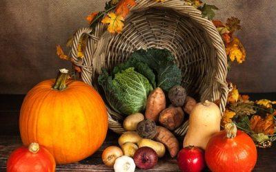 Sécurité alimentaire durable : une modélisation des cultures est nécessaire