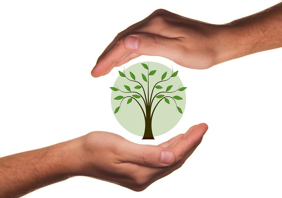 Le plan de transition écologique pour les PME/PMI/TPE