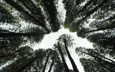 Reforestation : un nouveau type de forêts