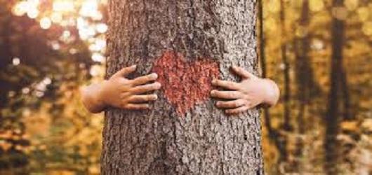 Les enjeux de la reforestation de notre planète