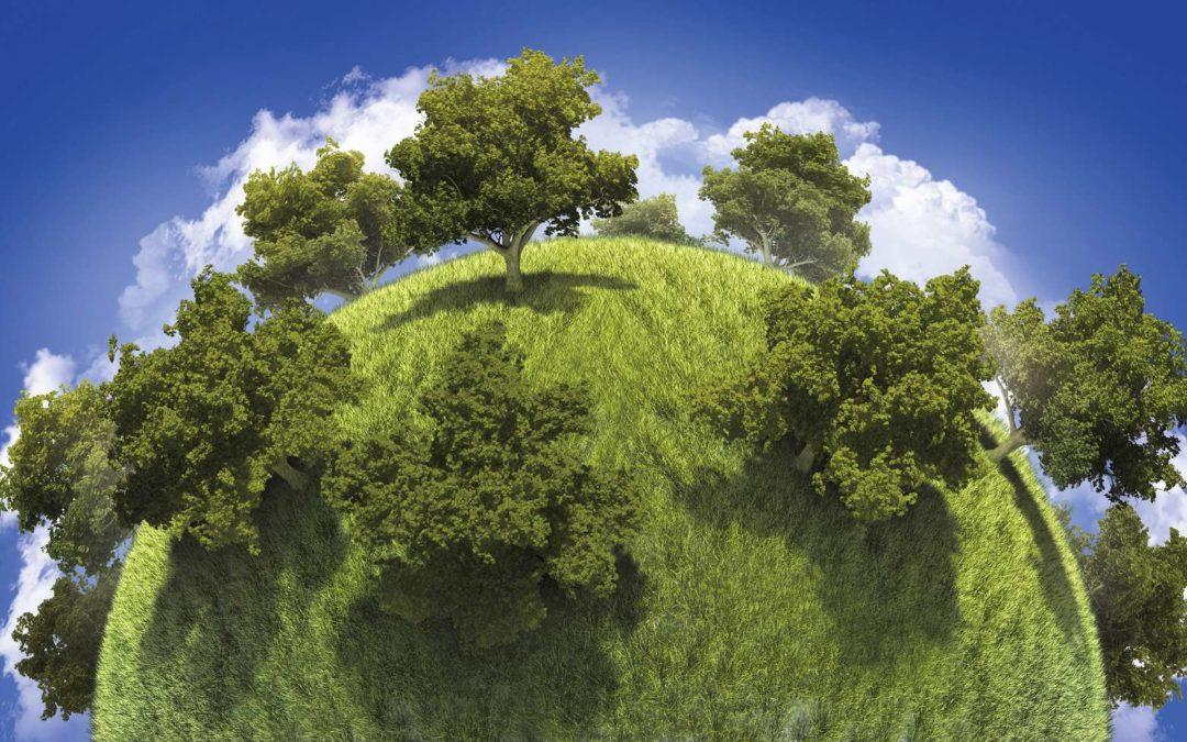 Plantation des forêts : est-ce efficace pour refroidir le climat ?
